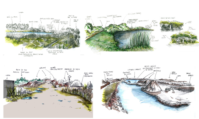 Projet carri re du colosse projet paysage zone up for Croquis jardin paysager